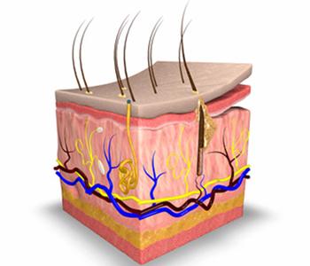 a-pele-dermatologia-e-saude-350x300