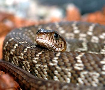 acidentes-por-serpentes-e-pele-dermatologia-e-saude